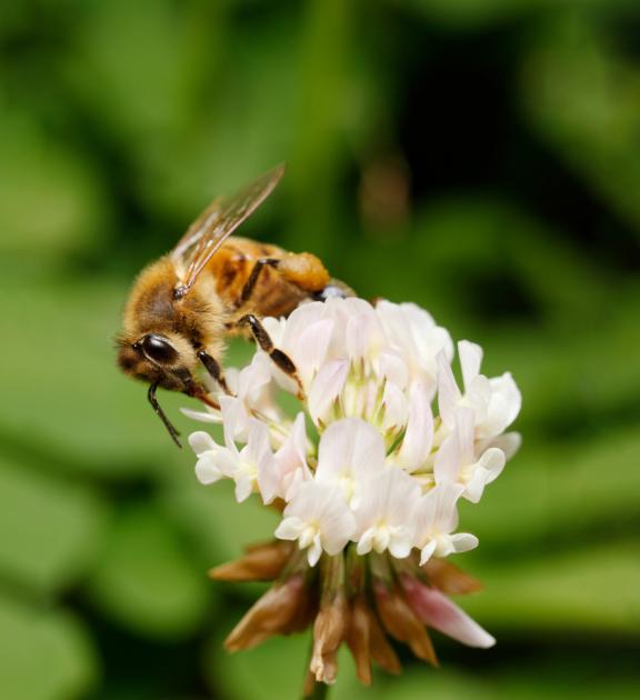 Bičių respublika – žydinčių augalų pilna teritorija bitėms ir kitiems vabzdžiams apdulkintojams. Jos idėja gimė siekiant sukurti palankias sąlygas tiems, nuo kurių priklauso daugiau kaip 75 proc. maistinių augalų rūšių derlius ir kokybė.